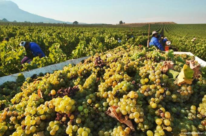 Os vinhos italianos em 6 capítulos!