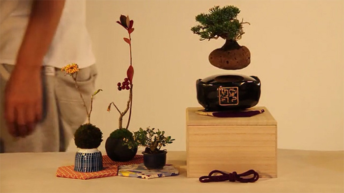 bonsai-flotante-4