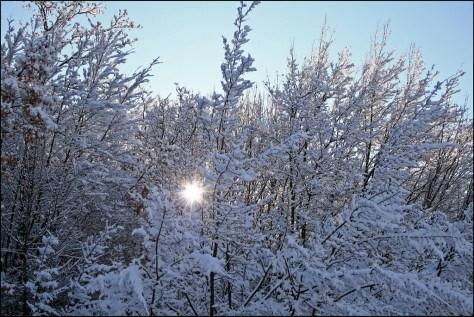 """""""Lascia che il sole splenda"""" di Enea Francia"""