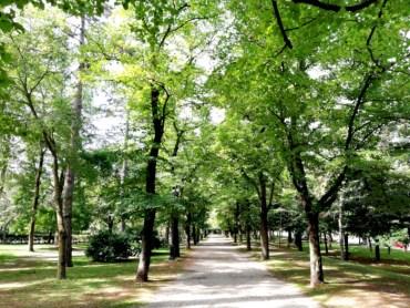 Gli alberi dei giardini pubblici
