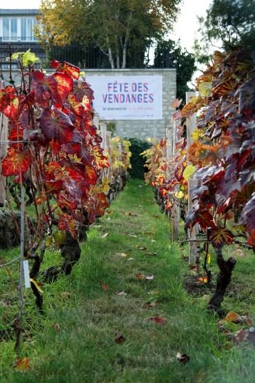 Le vigne a Montmartre - I toni rossi delle foglie di Vite