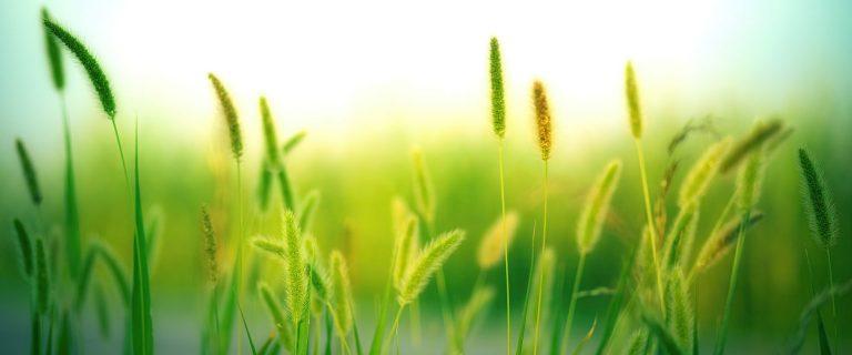 cropped-grass-3801535.jpg