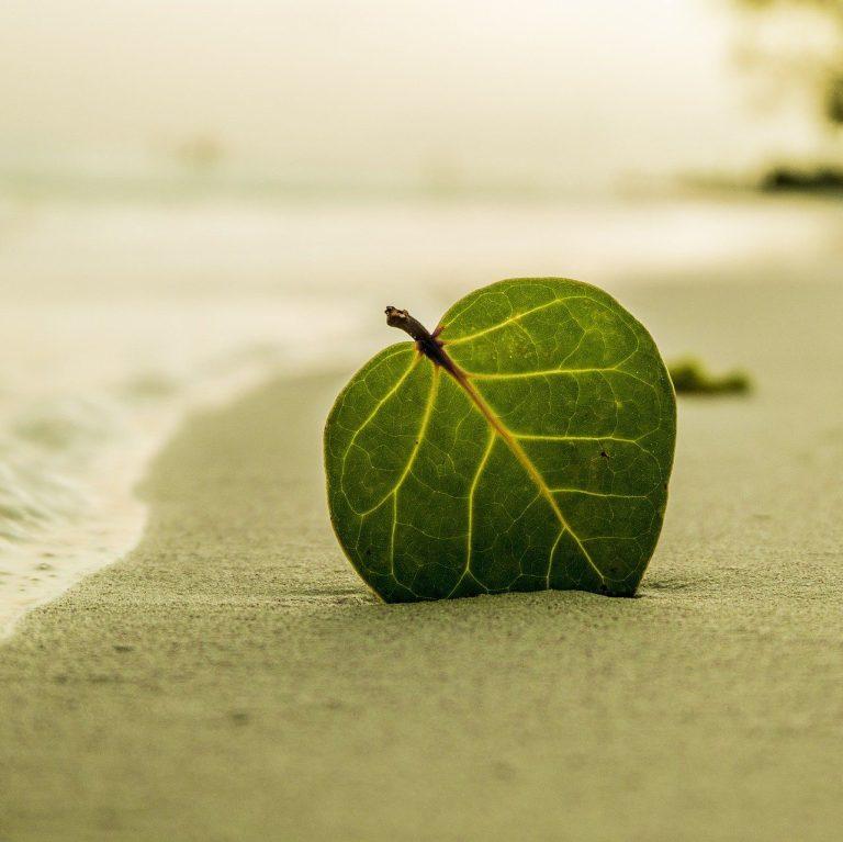 cropped-beach-394503_1920.jpg