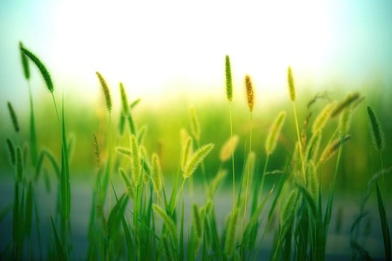 grass-3801535