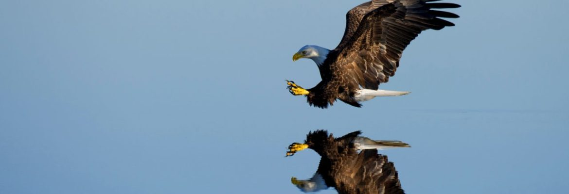 Marco Diversi Eagle Be A Free Man