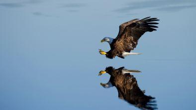 Marco Diversi Eagle Be A Free Man