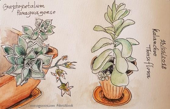 schizzi di piante sul terrazzo illustrazioni piante