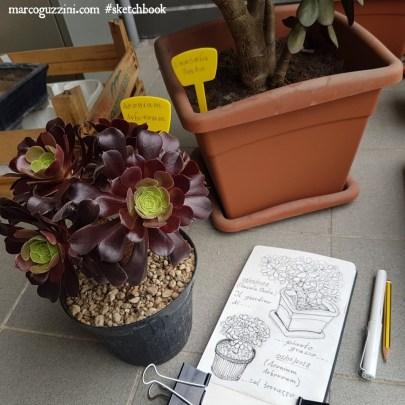 disegno dal vero illustrazioni di piante sul terrazzo