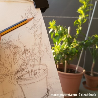 illustrazioni di piante - disegnare dal vero - schizzi di piante sul terrazzo