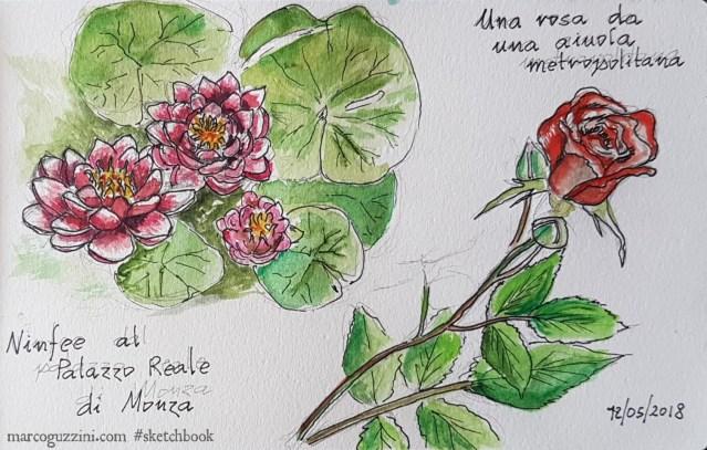 come disegnare fiori e piante illustrazioni piante