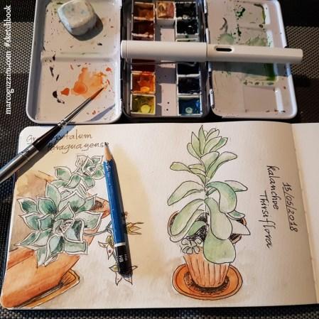 illustrazioni di piante sul terrazzo