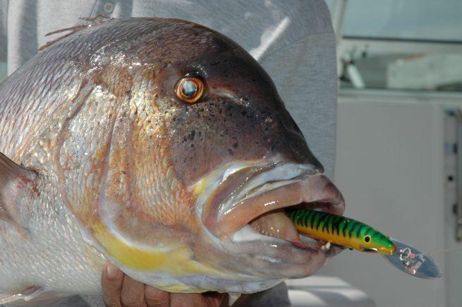 Il Rapala Magnum da 18 centimetri è il minnow ideale per insidiare i grossi dentici