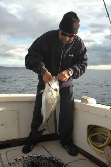 La pesca dalla barca all'orata avviene sia a bolentino che a light drifting, ma anche con il palamito e quindi con terminali del tutti disparati