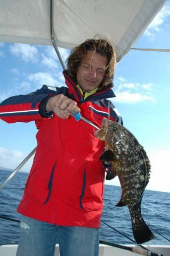 Calamaro e sardina sono le esche maggiormente impiegate per la pesca della cernia