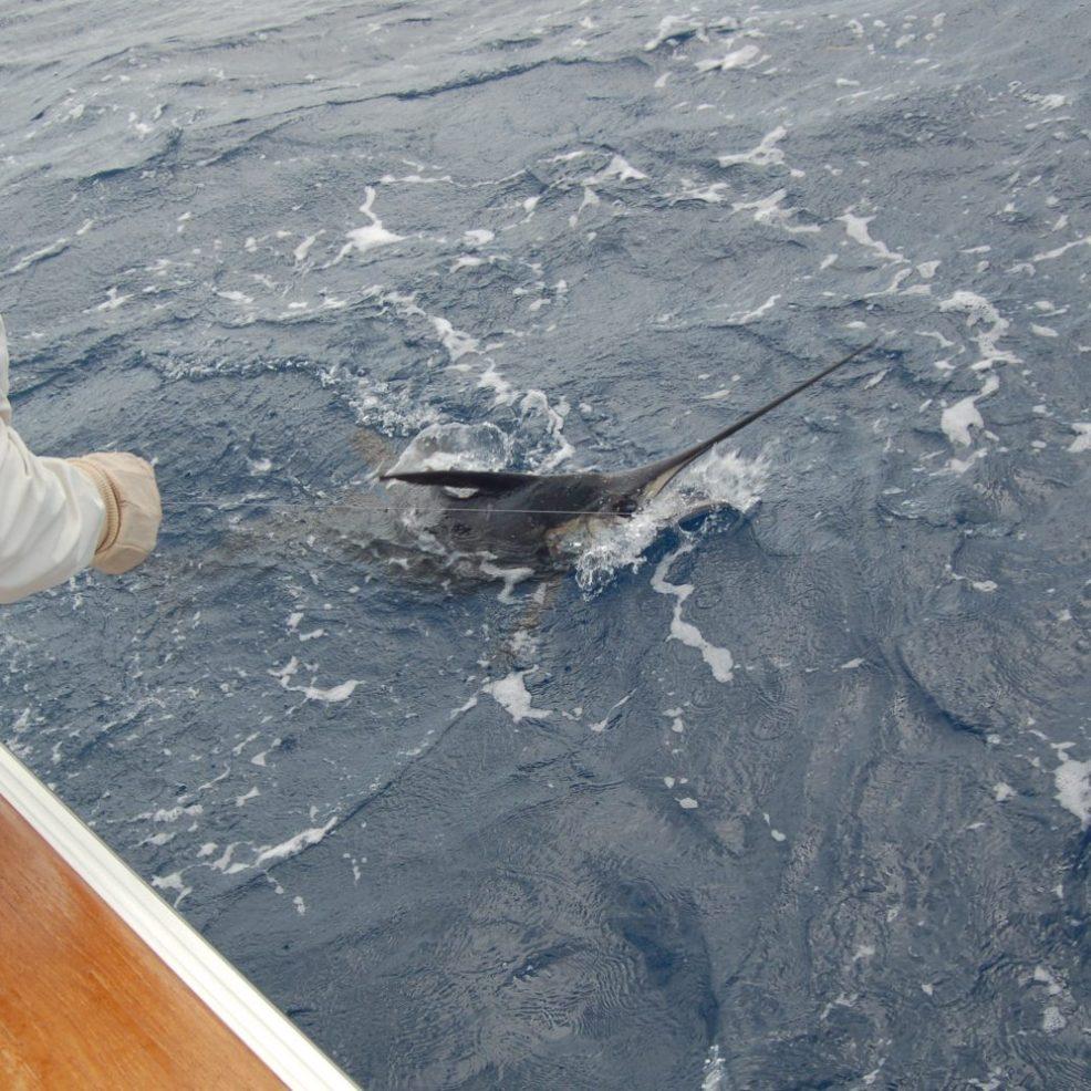 Il vela sottobordo sta per essere afferrato per il ristro
