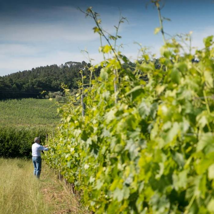 vigna-biodinamica-fattoria-sardi