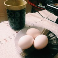The eggs laid by Sokhna Amy | Os ovos de Sokhna Amy
