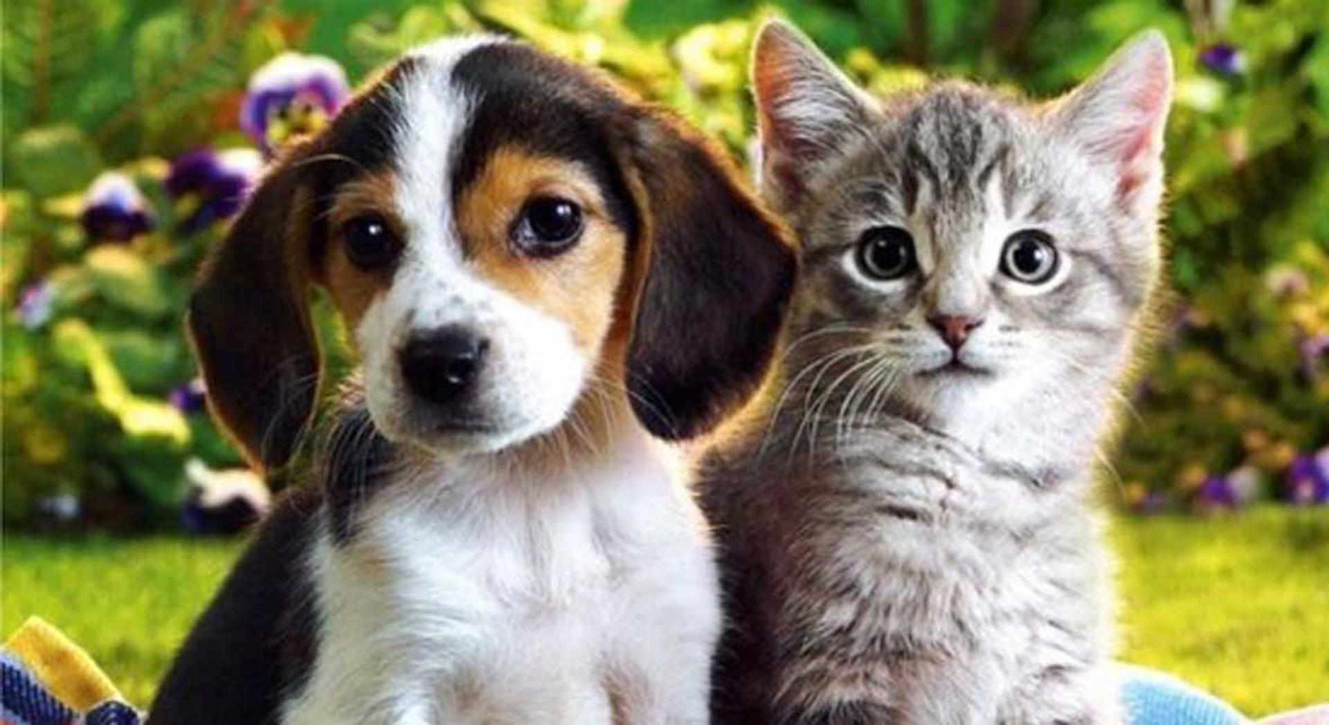 Perros vs gatos: cuál es su misión espiritual?