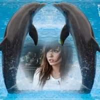 Marco de delfines para fotos