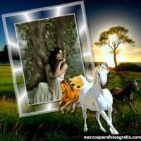 Marcos para fotos con bellos caballos