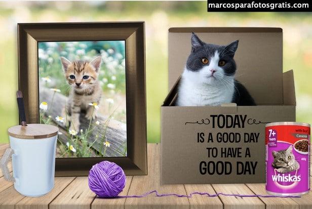 Fotomontaje con gatitos