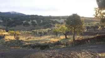 Ruta hacia la Yedra, Piedrabuena CIUDAD REAL
