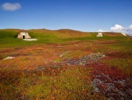 Bunker Fields
