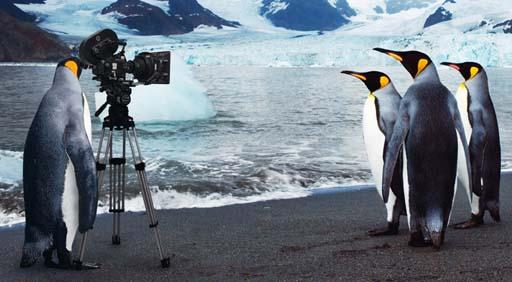 Os pingüíns vense elegantes en pantalla