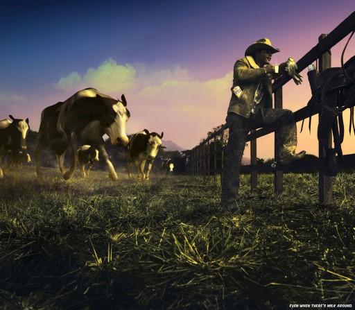 Vacas ó ataque