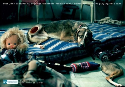 A dog is not a toy - photo 1