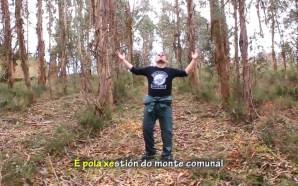 Alcolitos… eucaliptos…