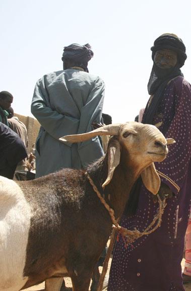 animal market, Gorom Gorom