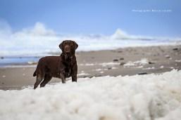 Hundefotoworkshop