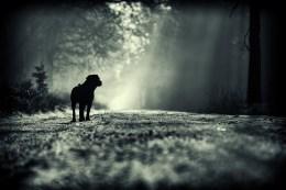 hundefoto_labrador_malou