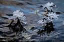 winterimpression_1DX_6131