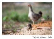 vinales_kuba_100