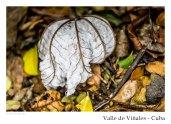 vinales_kuba_84