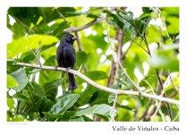 vinales_kuba_88