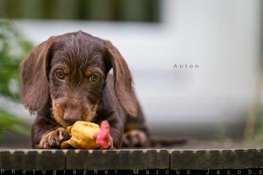 anton_DX_3099