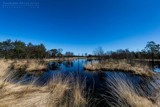 kleiner See mit trockenem Gras am Ufer Moorflächen Pietzmoor