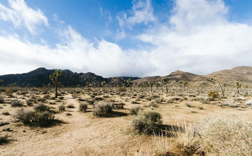 Racing In The Californian Desert
