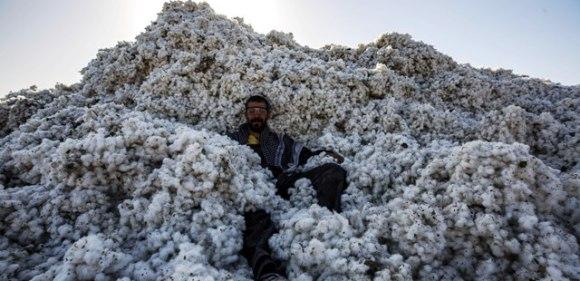 Mardin Ovası'nda pamuk  üretiminde artış