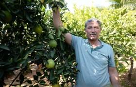 Mardin Ovasında Akdeniz iklimi meyveleri yetiştiriyor