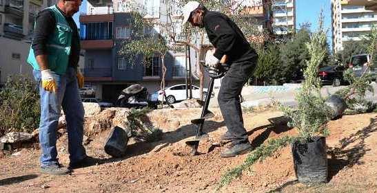 Artuklu'da ağaçlandırma seferberliği