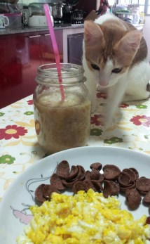 breakfast and cat
