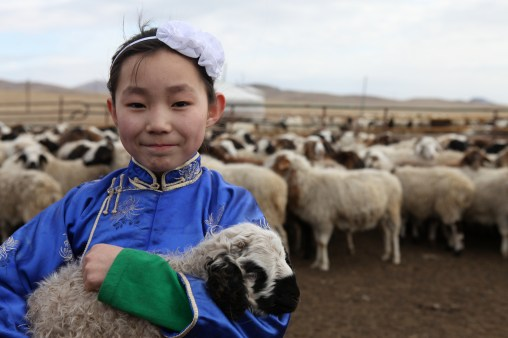 Khulan with a young sheep, Orkhon sum, Darkhan Province, Mongolia