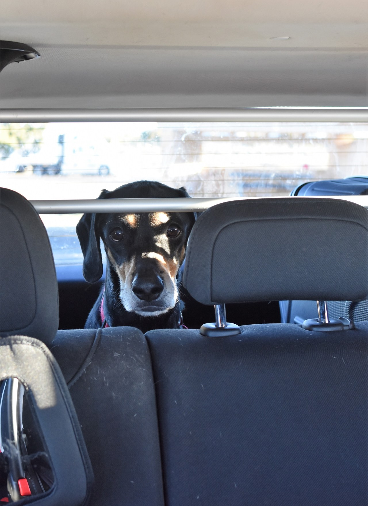 Tips for Taking a Road Trip With Kids and a Dog