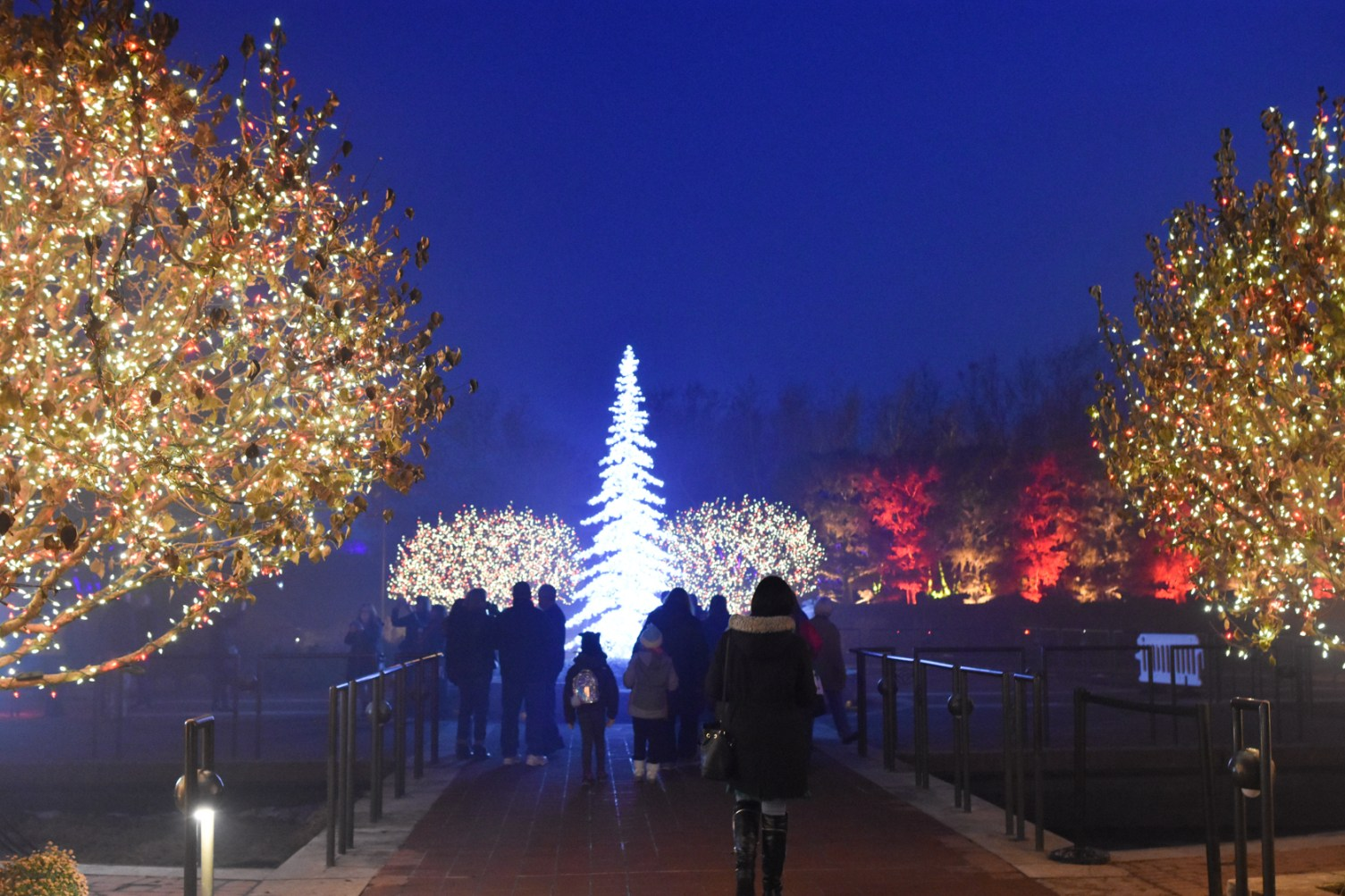 Our Visit To Lightscape At Chicago Botanic Garden Floradise