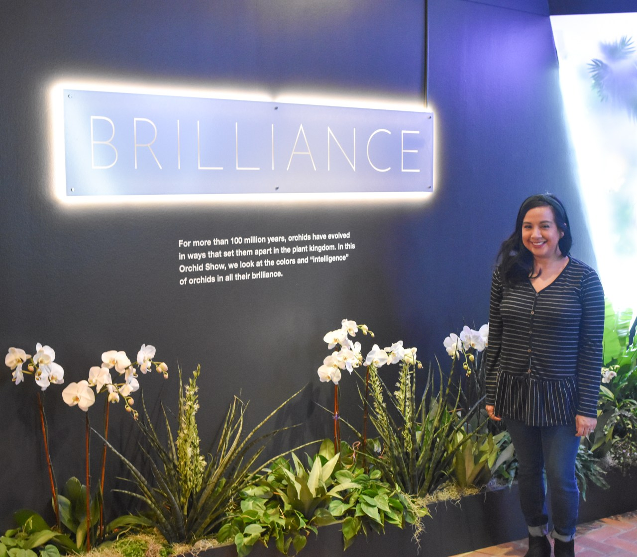 Brilliance: The Orchid Show 2020 at Chicago Botanic Garden