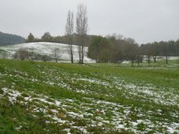 Snowy fields.